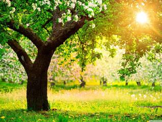 Spring your faith