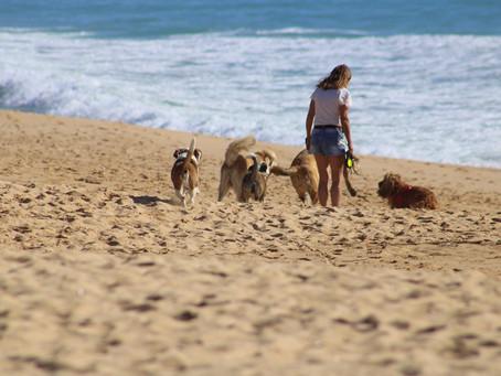 Dog Walking Your Way To Success