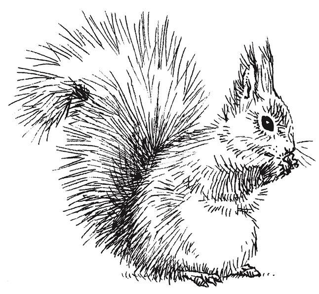 squirrel_3_copy.jpg