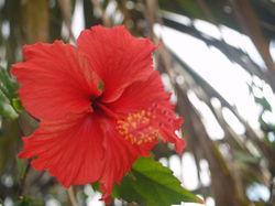 Foliage Coral 1