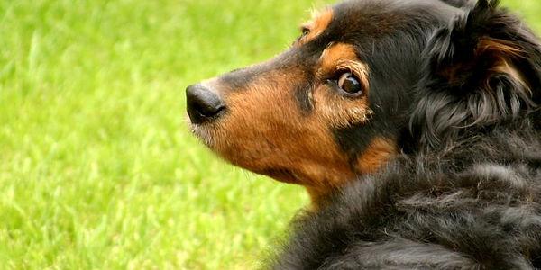 dog-765x383.jpg