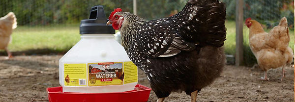 plastic-poultry-header.jpg
