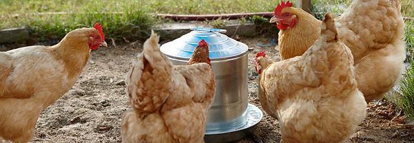 galvanized-poultry-header.jpg