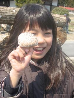 Shiitake picking