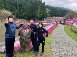 in the Ogaya shibazakura park