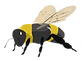 Bee 3.png
