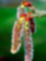 flor-019-Aspen.jpg
