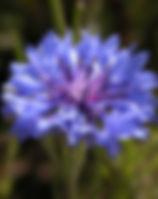 bluet 2.jpg