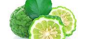 Citrus-hystrix-DC.-Rutaceae..jpg