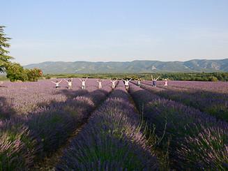Provence 2015