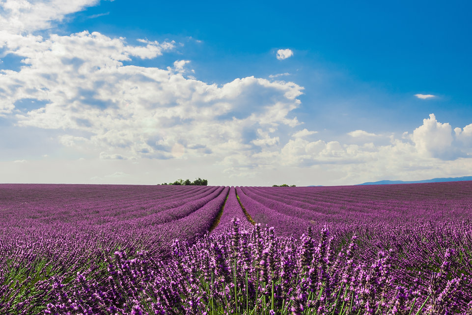 horizontal-shot-of-a-field-of-beautiful-