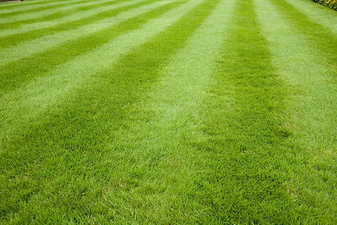 bright green mowed lawn