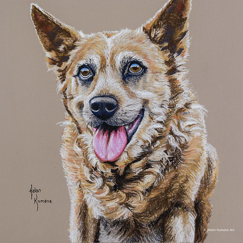 Greeting Card | 'Cattle Dog' Western Australian favourite
