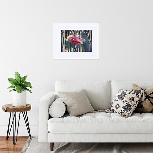 Framed Print  |  'Gum Nuts in Flower', Eucalyptus