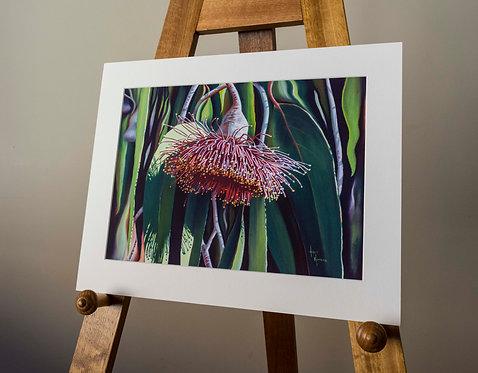 Unframed Print | 'Gum nuts in flower', Eucalyptus