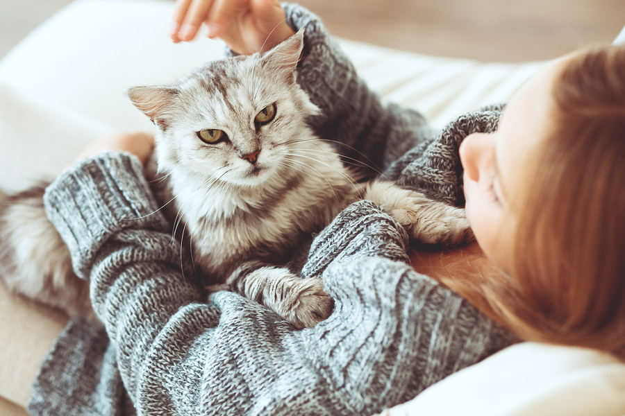 Pet dander is one of the common causes of winter allergies