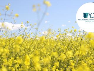 Managing Spring Allergies | Little Rock Allergist