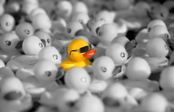 stand-out-in-the-crowd duck.jpg