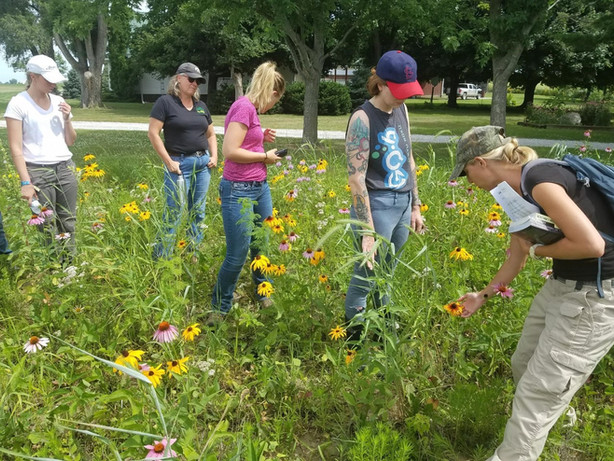 Summer members learning about plants for pollinators on William Penn University campus.