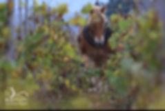 cheval_vin.jpg