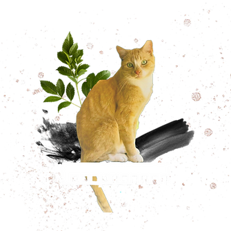Digging_Cat_Homestead_Logo1_Blank.png