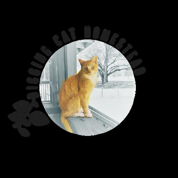 Digging_Cat_Homestead_2.png