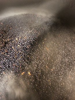 17' Pinot Noir being kept fresh preferment with dry ice = CO2