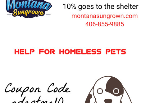 Help For Homeless Pets