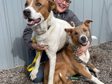 Help Our Shelter Animals