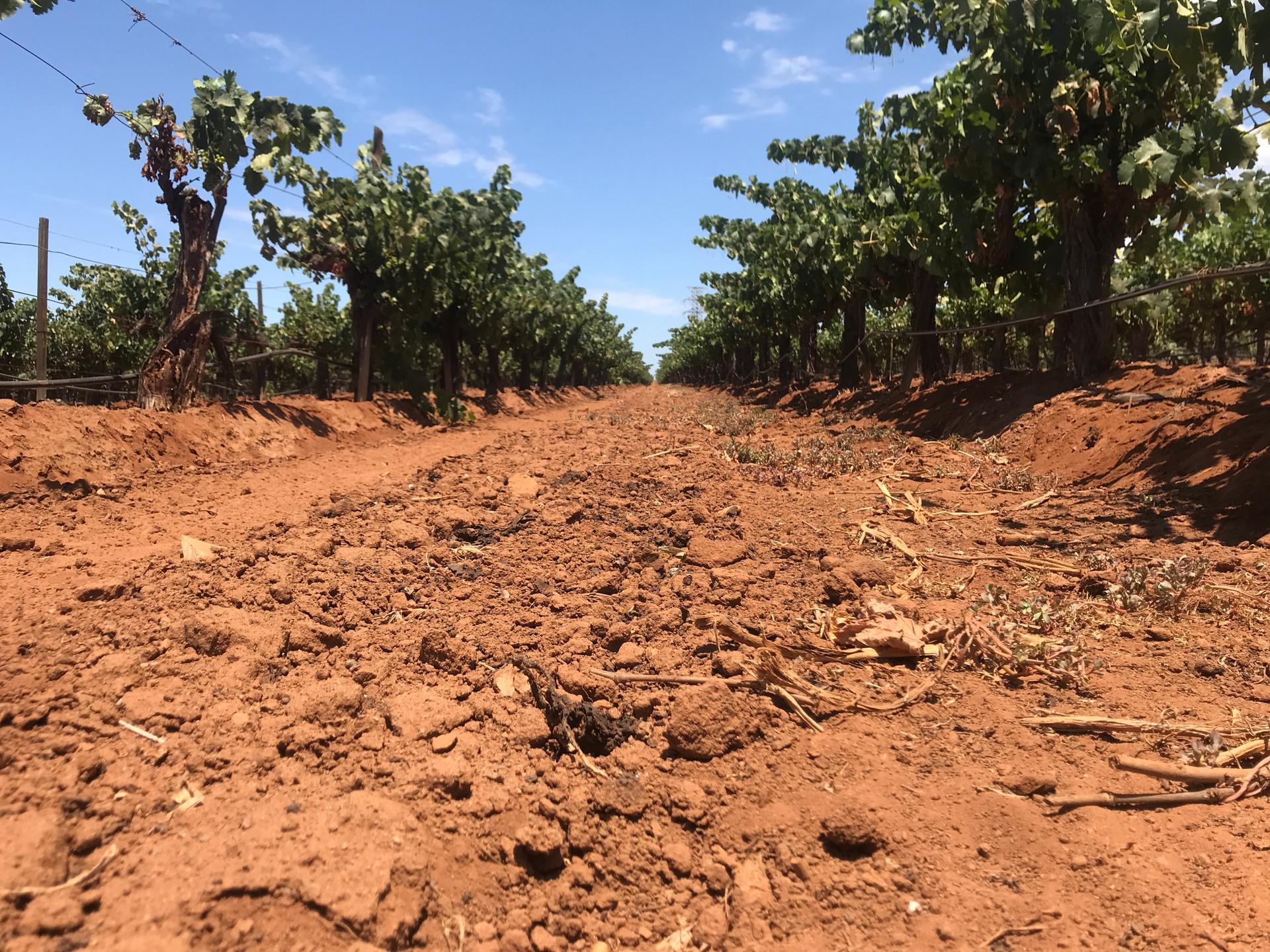 Plata Vineyards.JPG
