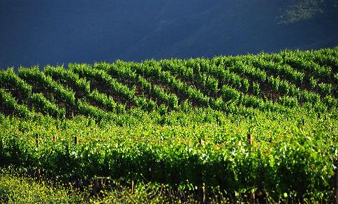 Paoloni Vineyards.JPG