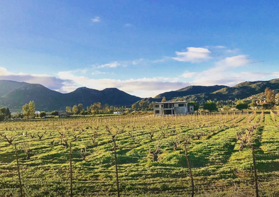 A sneek peak at the future of Symmetria. When Mauricio envisioned a new winery he started with the vines.