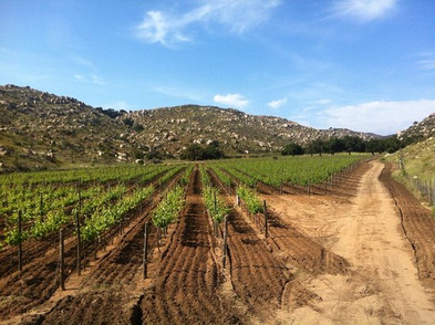 Solar Fortun Vineyards.jpg