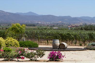 Carrodilla vineyard.jpg