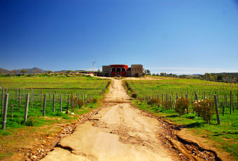 Boutique organic biodynamic estate in Valle de Guadalupe