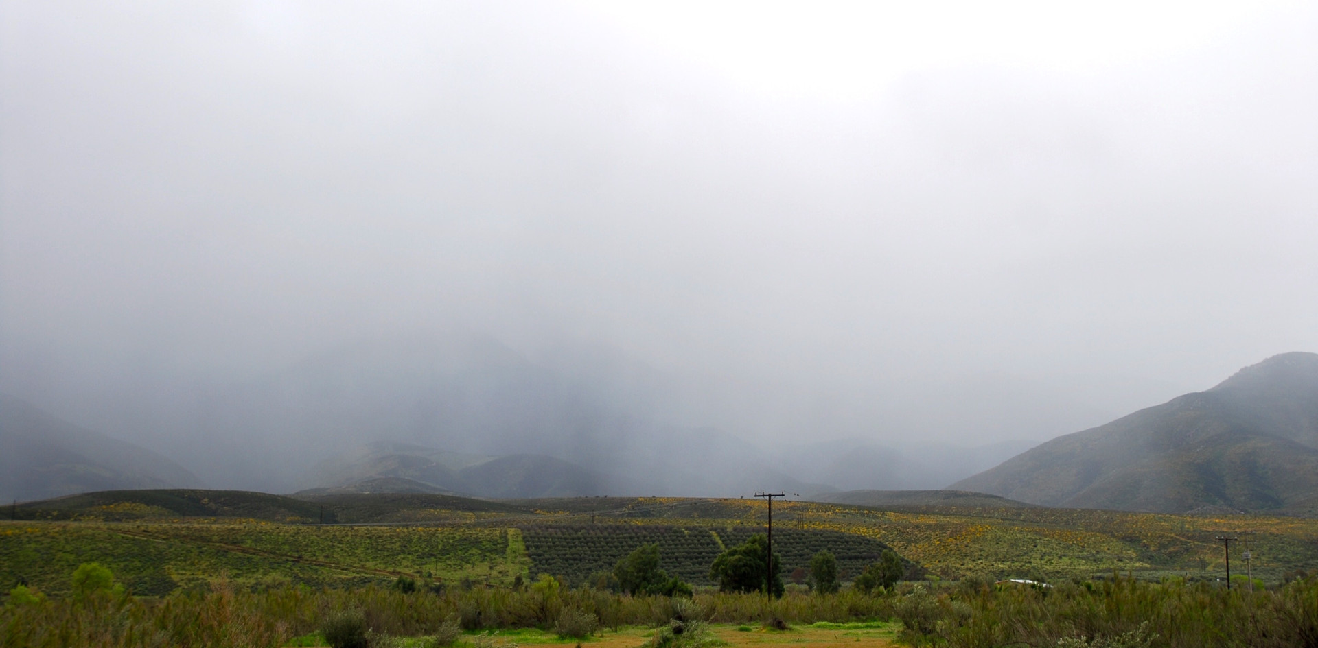Morning fog comes in from the ocean and lays over the valley. This fog plays a significant role in tempering the climate, making it an ideal location to plant grape vines.
