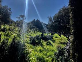 Organic natural living vineyard of Mina Penelope