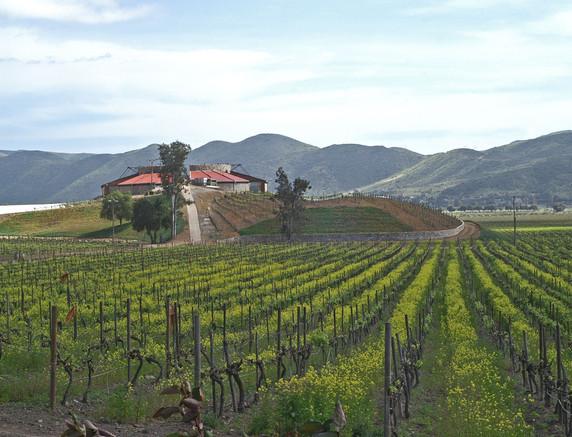 Vineyards of Santo Tomás in Valle de Santo Tomás.