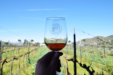 Lechuza vineyards 4.jpg