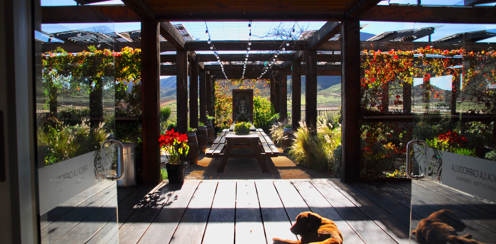 "Oh to be a vineyard dog in Northern Baja. ""Choco"", the vineyard dog of Finca Carrodilla setting a prime example of relaxation in their tasting room."