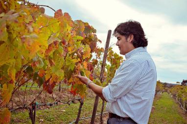 Organic Biodynamic Natural native yeast winemaker