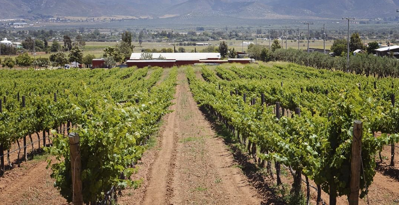 Rubio family vineyards