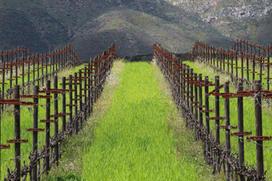Organic vineyards of Corona del Valle