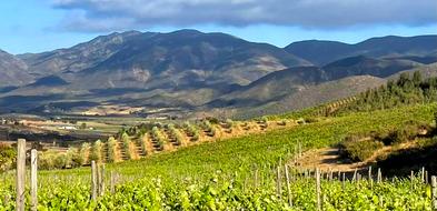 La Grulla Vineyards 2 .png