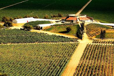 Santo Tomas Winery .jpg