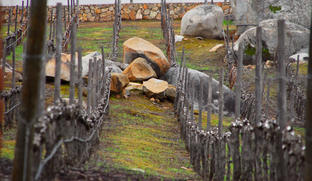 organic natural vineyard of Vinisterra winery in Valle de Guadalupe baja california Mexico