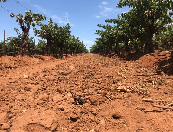 Vineyard site in Valle de San Vicente
