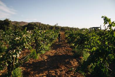 pijoan winery.jpg