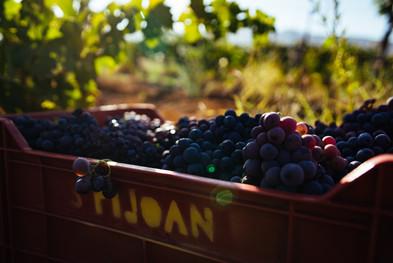 Caja con uva.jpg