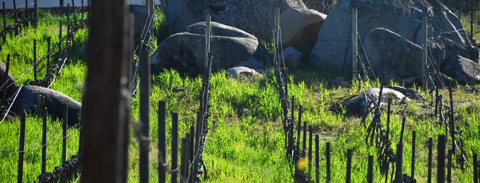 The Pedregal Clos of Vinisterra winery where a dedication to honesty of place means leaving everything as just as you found it - massive boulders included.